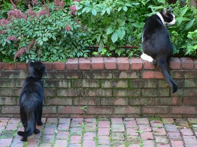 Jeoffry and Jake in the garden looking around