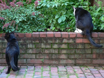 Jeoffry and Jake in the garden looking the other direction