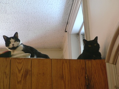 cats atop closet in sacristy