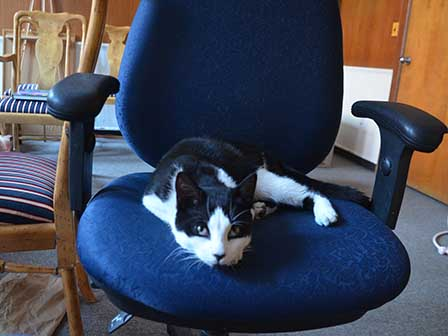 Simon on chair