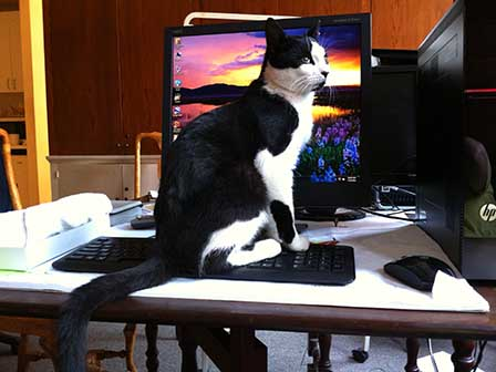Simon on computer